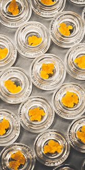 Buy GREEN SAMURAI LED VAPE KIT – CHROME RED online Canada