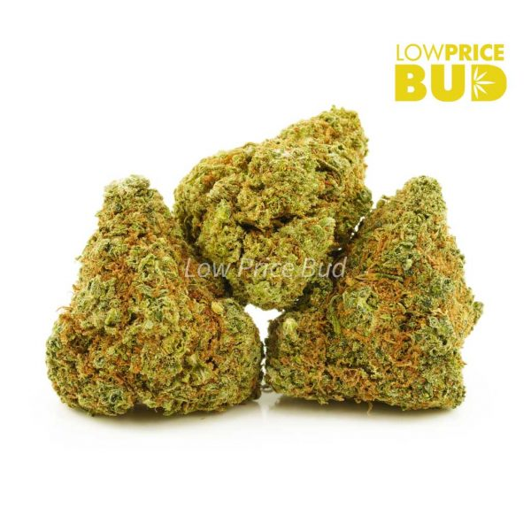 Buy Sour Tangie (AA) online Canada