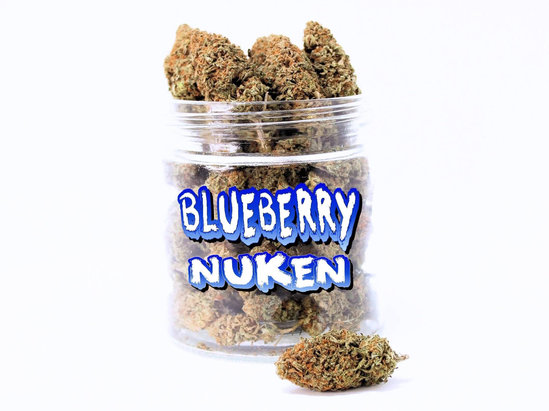 BLUEBERRY NUKEN (AAA)