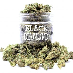 buy pounds of weed online canada