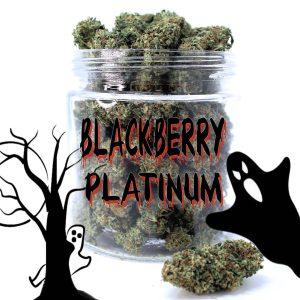 platinum blackberry kush strain