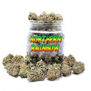 Northern Rainbow strain for sale