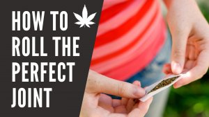 how to roll the perfect joint