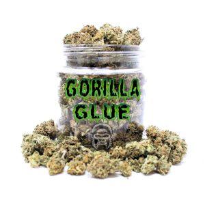 GORILLA GLUE #1 (A+)