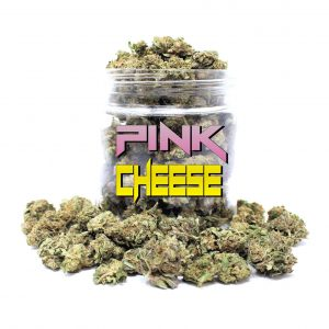 Order Pink Cheese bud