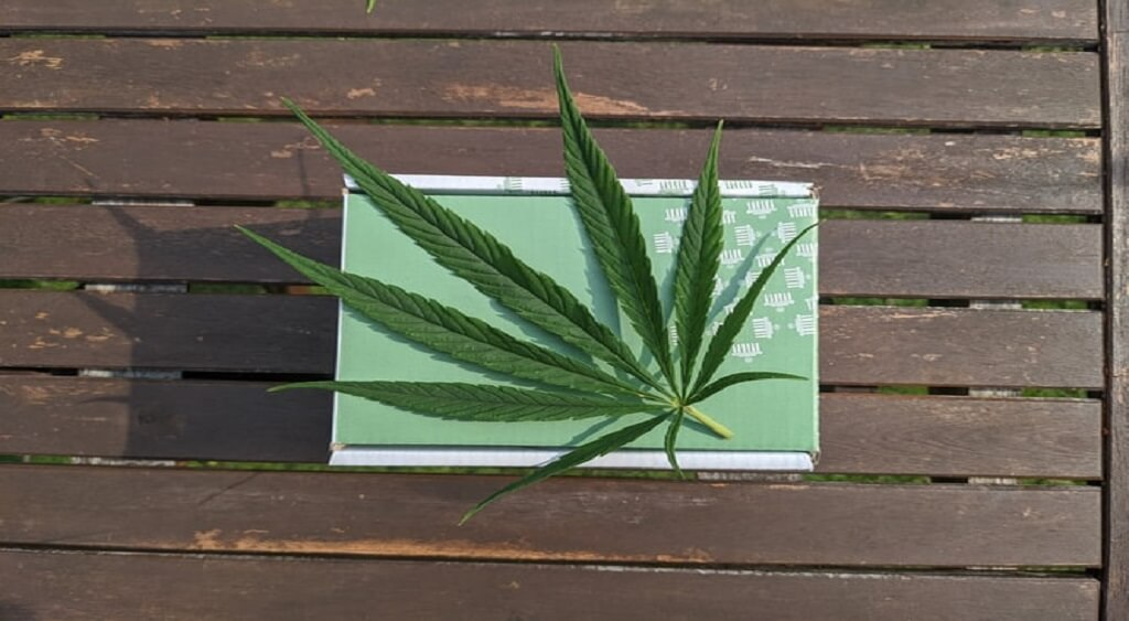 Why Marijuana Should be Legal | Low Price Bud