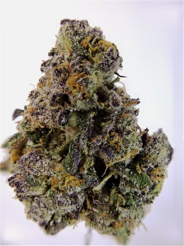 Buy ORANGE GELATO (AAAA) online Canada