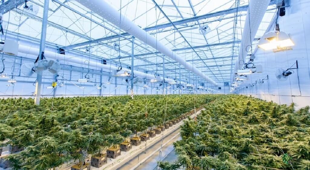 Grow Marijuana Outdoors | Low PRice Bud Canada
