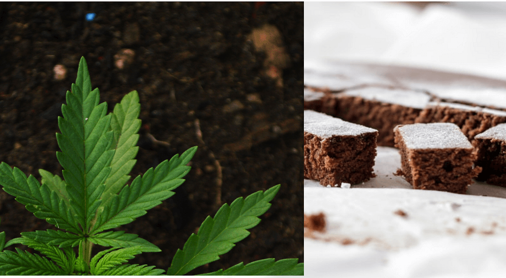 Is Sativa or Indica Better for Edibles?
