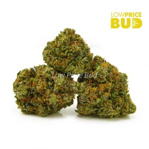 Buy Build Your Own Oz 8 x 3.5g online Canada