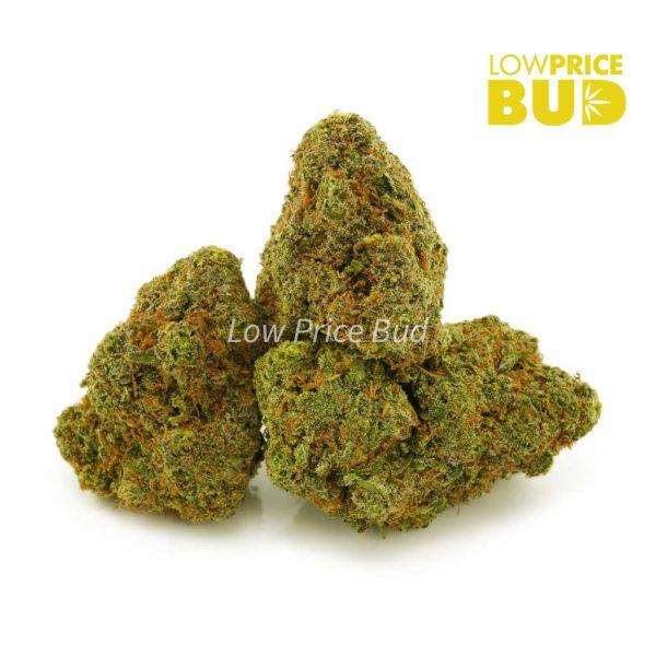 Buy King Louie XIII (AAAA) online Canada