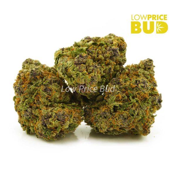 Buy Purple Punch (AAA) online Canada