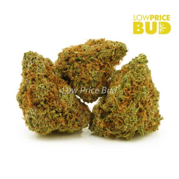 Buy Sour Haze (AA) online Canada