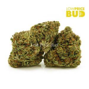 Buy Purple Gas (AA) online Canada