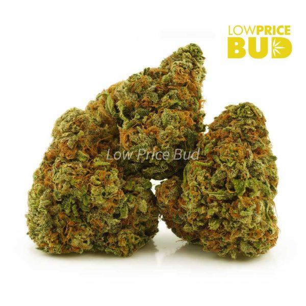 Buy Green Congo (AA) online Canada