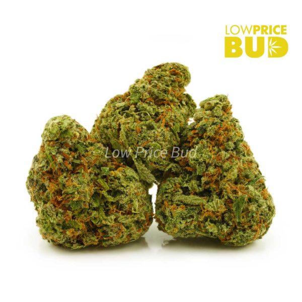Buy Dutch Haze (AAAA) online Canada