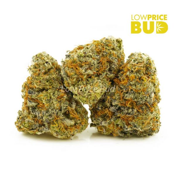 Buy Apple Fritter (Exotic) online Canada