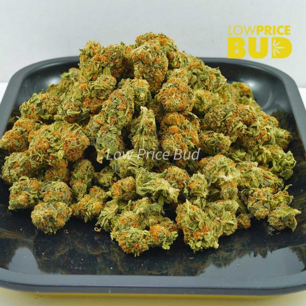 Buy Mimosa (AA) online Canada