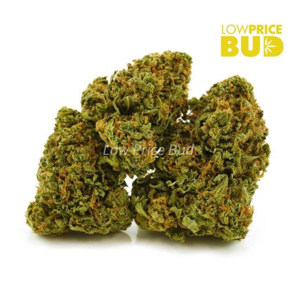 Buy Slurricane (AA) online Canada