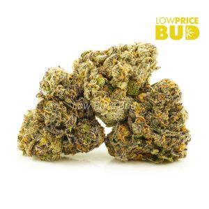 Buy Blueberry Unicorn (Exotic) online Canada