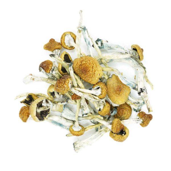 Buy Mushrooms – Alacabenzi online Canada