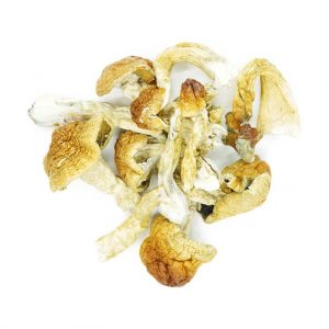Buy Mushrooms – Arenal Volcano online Canada