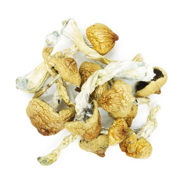 Buy Mushrooms – Blue Meanies online Canada
