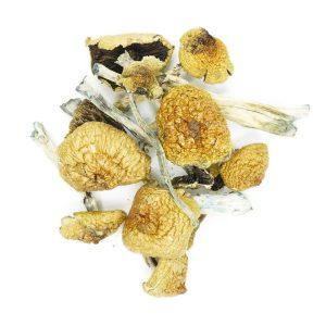 Buy Mushrooms – B+ online Canada