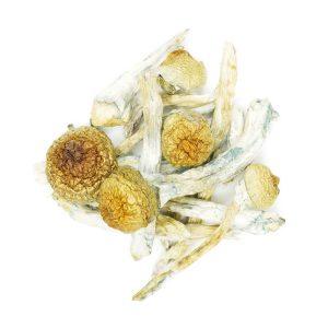 Buy Mushrooms – Golden Halo online Canada