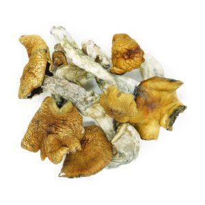 Buy Mushrooms – King Kong online Canada