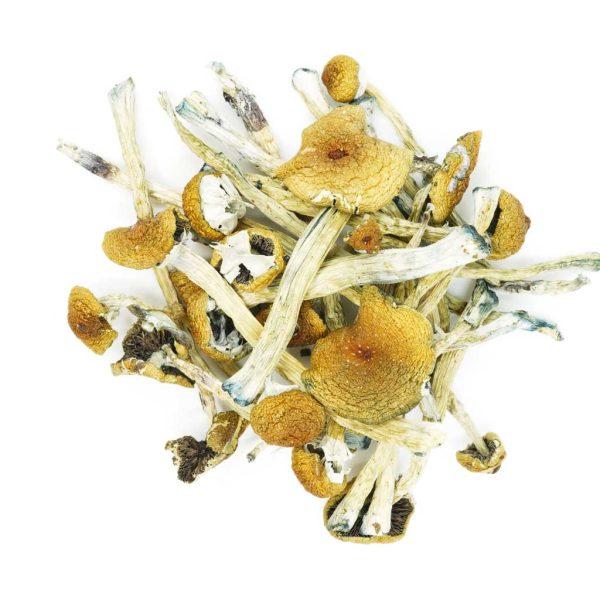Buy Mushrooms – Penis Envy #6 online Canada