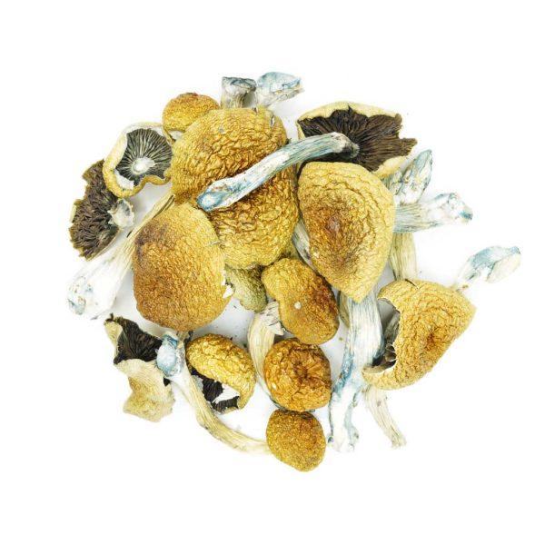 Buy Mushrooms – Texas Penis Envy online Canada