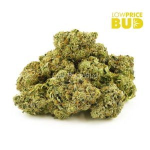 Buy Pink Panther (AAAA) online Canada