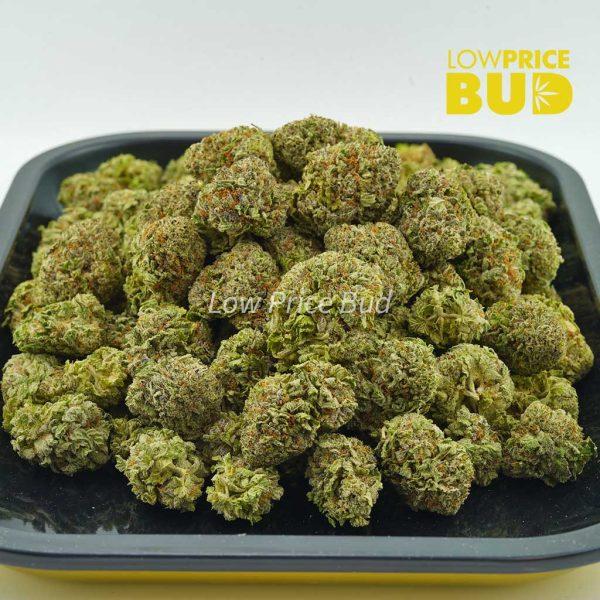 Buy Purple Kush (AAA) online Canada